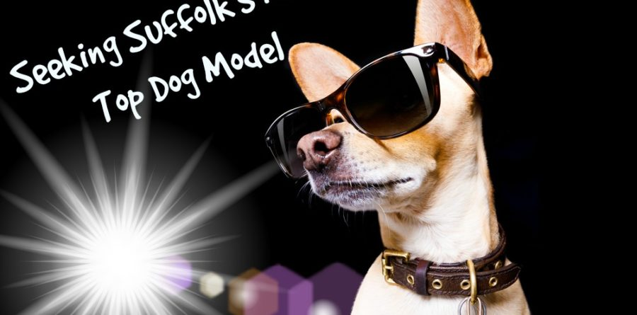 Suffolk Canine Creche supports the Lighthouse Summer Fashion Show
