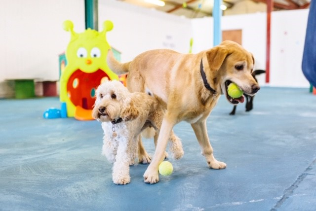 Canine Creche Group Develops and Launches New Social Club
