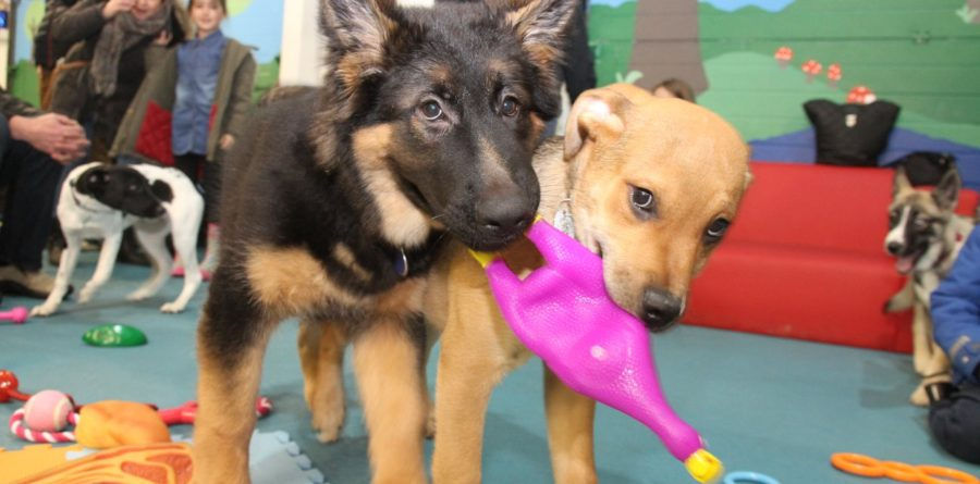 Canine Creche group has standards to make your tail wag!