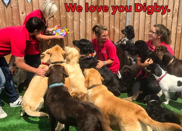 Turn your love of dogs into a career