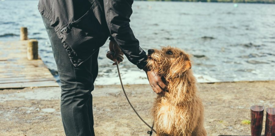 Discovery Day – own a business working with dogs