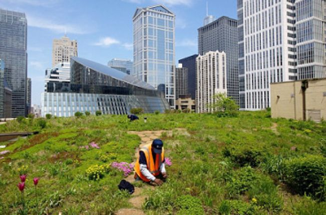Are blue and green roofs the future for East Anglia?