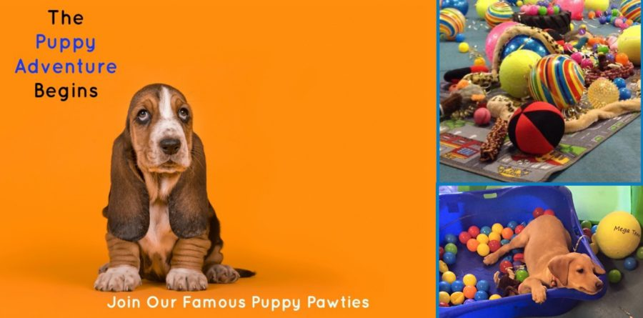 Suffolk Canine Creche release Puppy Paw-ty dates for September 2019