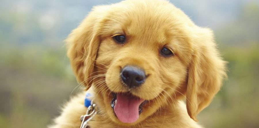 Suffolk Canine Creche – Puppy paw-ties for the new decade