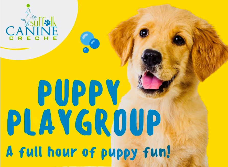 Puppy Playgroup launches for 'lockdown puppies'