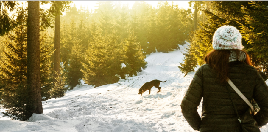 top tips on how to keep your dog healthy this winter
